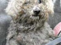 Niewidomy pies żyjący przy śmietniku