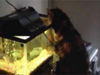 Kot vs Ryba