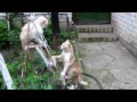 Wojna kotów