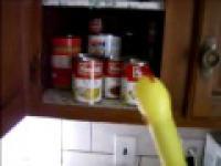 Głodny niespodzianka kurczaka