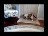 Kroki Cat z muzyką