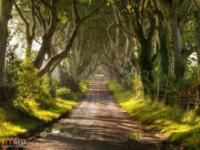 Tunel z drzew w Północnej Irlandii