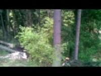 Profesionalna wycinka lasu