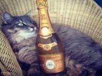 Życie bogatych kotów