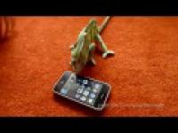 Reakcja kameleona na Ipod touch