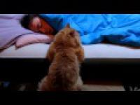 Kot próbuje obudzić mojego brata z łóżka.