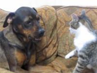 1 pies, 1 kot, 1 sofa