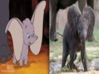 Zwierzęta z filmów w Disneya w rzeczywistości