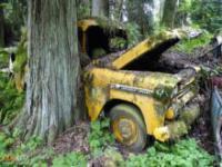 Cmentarz samochodów w lesie