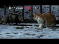 Opos vs Kot - runda pierwsza