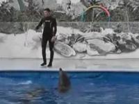 Delfin, który potrafi poruszać się po lądzie