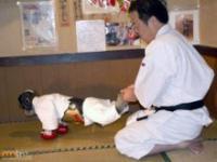 Małpka trenująca sztuki walki