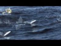 Latające rybyy!!