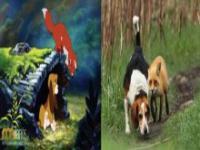 Zwierzęta z filmów animowany w rzeczywistości