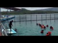 Delfin - podrywacz