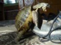 Żółw Stefan
