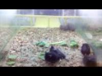 Hamsters Shake  Chomik-Shake