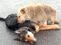 Pies, który stracił przyjaciela