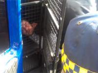 Zachowanie Toruńskiej Straży Miejskiej W Toruniu wobec Niewinnego Człowieka