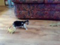 Kociak vs jaszczurka