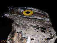 Ptak z dziwnymi oczami