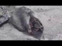 Potwór na plaży!!