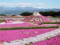 Piękny rózówy park japoński