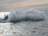 Lokalny rybak i wieloryb