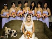 Nieoczekiwani goście na fotografiach ślubnych