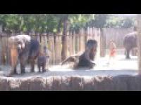 Śmieszne czyszczenie słonia