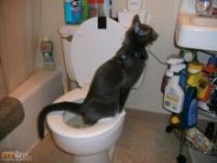 Jak nauczyć kota załatwiać się do toalety