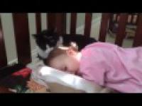 Kot liże głowę dziecka