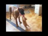 Śmieszne Kot chce kawałek Psa Food! 2014 So Cute!