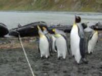 Pingwiny i sznurek