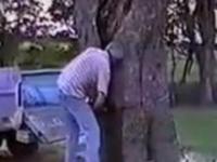 Perfekcyjne ścięcie drzewa