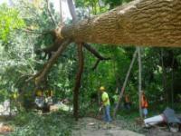 Wielka huśtawka zbudowana na drzewie