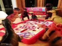 Ożywione dinozaury