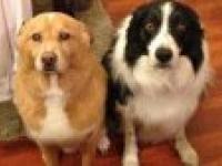 Kompilacja psów z poczuciem winy