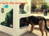 Jak uporać się z problemem głodnych, bezdomnych psów