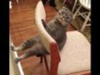 Cat compilation 2014   Komplikacja kotów 2014   Funny Cats