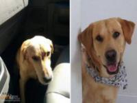 Adoptowane zwierzaki