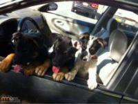 Pierwsza przejażdżka adoptowanych psów