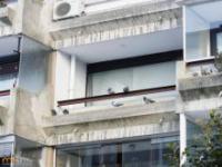 Mężczyzna pozwalał mieszkać dzikim gołębiom w jego mieszkaniu