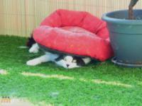 Koty robią najdziwniejsze rzeczy