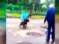 śmiertelne psy atakują (Stafford Attack)
