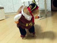 Najlepszy strój dla kota - pirat!
