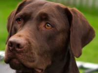 Pies postrzelił swoją właścicielkę. Wabi się Spust