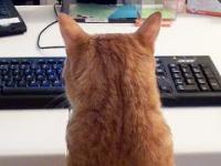 Jak wygląda praca przy komputerze, gdy w domu masz kota?