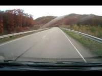 Tygrys na drodze