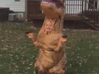 Dzieciak w stroju T-Rexa dostarcza ojcu sporej dawki śmiechu